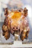 Cerdo en una escupida Foto de archivo