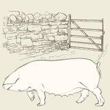 Cerdo grande en la puerta Fotos de archivo