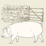 Cerdo grande en la puerta Imagenes de archivo