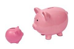 Cerdo grande que mira el pequeño cerdo Imagen de archivo libre de regalías