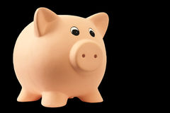Cerdo guarro fotografía de archivo libre de regalías