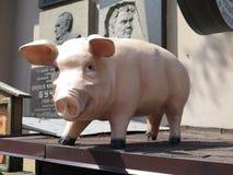 Cerdo hermoso foto de archivo