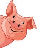 Cerdo que mira a escondidas hacia fuera de la izquierda - vector ilustración del vector