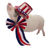 Cerdo vestido para el cuarto de julio Imagen de archivo libre de regalías
