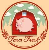 Cerdo y granero rojo en logotipo Imagenes de archivo