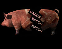 Cerdo y tocino 10 Foto de archivo libre de regalías