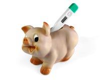 Cerdo y un termómetro Imágenes de archivo libres de regalías