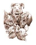 cerdos Imagen de archivo
