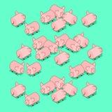 Cerdos de la manada Animal del campo de cerdo Ilustración del vector stock de ilustración