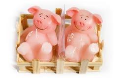 Cerdos de la vela Imagen de archivo
