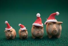 Cerdos que llevan el sombrero de la Navidad Imagen de archivo