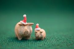 Cerdos que llevan el sombrero de la Navidad Fotos de archivo