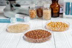 Cereais no prato de petri para a análise no fundo de madeira Fotos de Stock