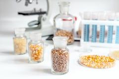 Cereais nos tubos de ensaio de vidro para a análise no laboratório imagem de stock