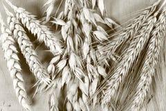 Cereal Fotos de archivo libres de regalías