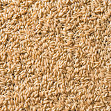 Cereal. Multitude of little cereal closeup Stock Image