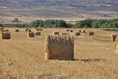 Cereal Bales Stock Images