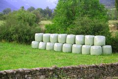 Cereal bales round green plastic wrap cover Stock Photos