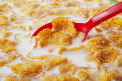 Cereal in the bowl with milk and red spoon Stock Image