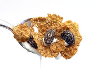 Cereal Close royalty free stock photography