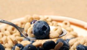 Cereal con los arándanos fotografía de archivo libre de regalías