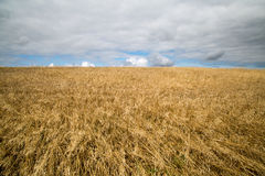 Cereal crops in Cornwall uk Stock Photos
