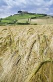 Cereal crops and farm in Tuscany Stock Images