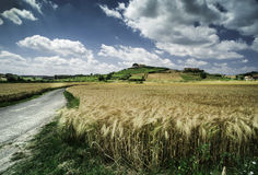 Cereal crops and farm in Tuscany Royalty Free Stock Image