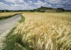 Cereal crops and farm in Tuscany Royalty Free Stock Images