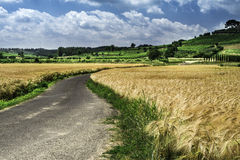 Cereal crops and farm in Tuscany Stock Photos
