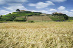 Cereal crops and farm in Tuscany Royalty Free Stock Photos