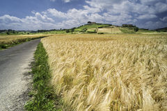 Cereal crops and farm in Tuscany Stock Photo