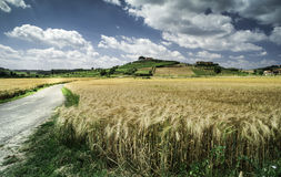 Cereal crops and farm in Tuscany Royalty Free Stock Photography