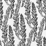 Cereal crops sketches. Vector seamless pattern with hand drawn cereal crops sketches Royalty Free Stock Photos