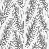 Cereal crops sketches. Vector seamless pattern with hand drawn cereal crops sketches Royalty Free Stock Photography