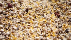 Cereal del grano Imagen de archivo libre de regalías