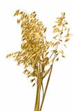 Cereal del trigo en blanco Fotografía de archivo libre de regalías