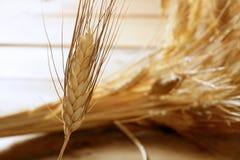 Cereal dourado do trigo, ainda vida Imagens de Stock Royalty Free