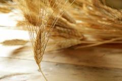Cereal dourado do trigo, ainda vida Fotos de Stock
