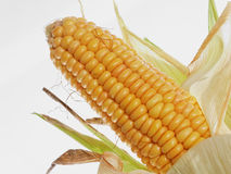 Cereal. Ears of corn on white wall Stock Images