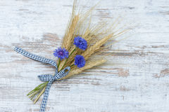 Cereal ears with cornflowers Stock Images