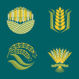 Cereal ears and grains agriculture industry or logo badge design vector food illustration organic natural symbol Stock Photo