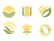 Cereal ears and grains agriculture industry or logo badge design vector food illustration organic natural symbol Royalty Free Stock Photos