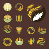 Cereal ears and grains agriculture industry or logo badge design vector food illustration organic natural symbol Royalty Free Stock Image