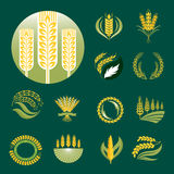 Cereal ears and grains agriculture industry or logo badge design vector food illustration organic natural symbol Royalty Free Stock Images