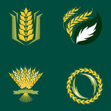 Cereal ears and grains agriculture industry or logo badge design vector food illustration organic natural symbol Royalty Free Stock Photo