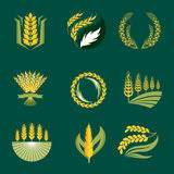 Cereal ears and grains agriculture industry or logo badge design vector food illustration organic natural symbol Stock Photography