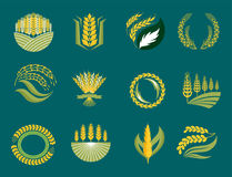 Cereal ears and grains agriculture industry or logo badge design vector food illustration organic natural symbol Stock Images