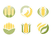 Cereal ears and grains agriculture industry or logo badge design vector food illustration organic natural symbol. Cereal ears and grains set for agriculture Stock Image