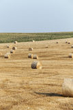 Cereal farming field Royalty Free Stock Photo